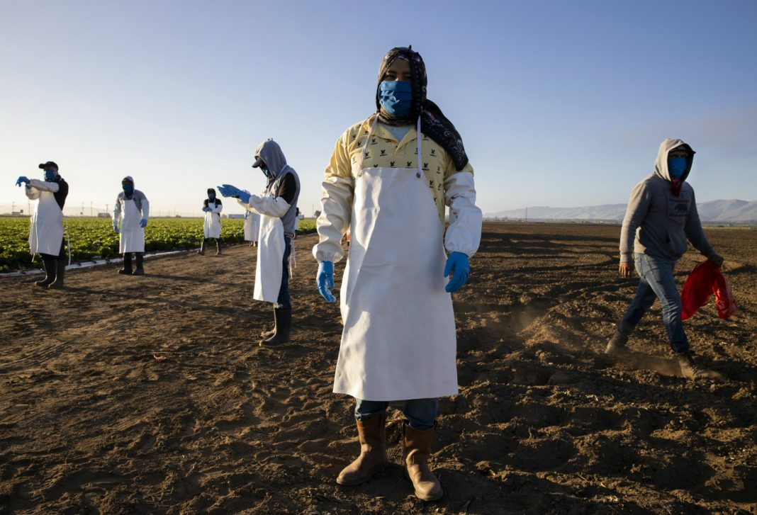 farmworkers california