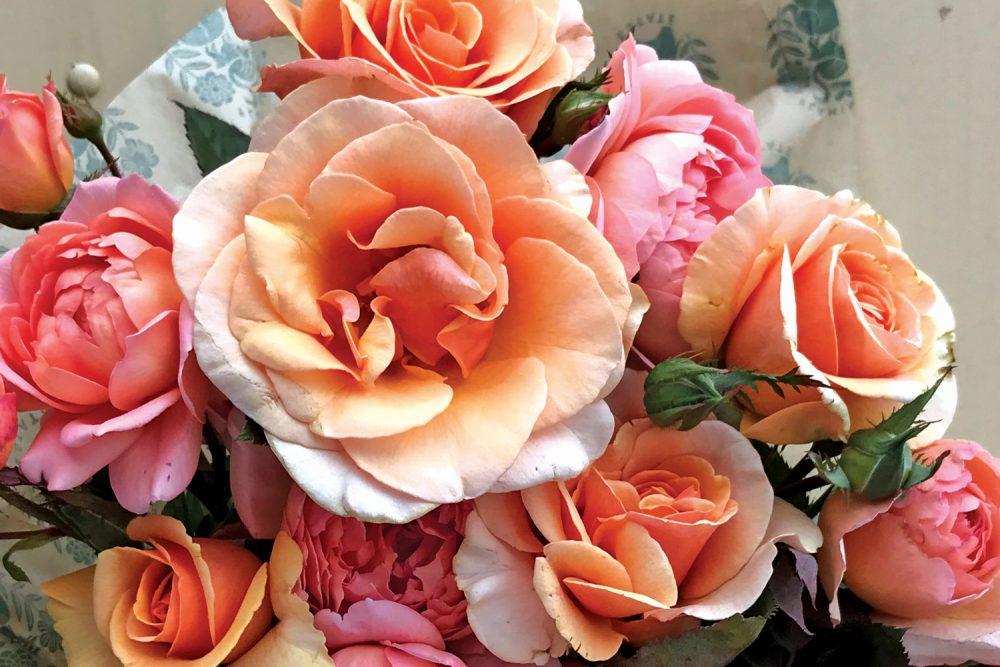 rose lane farms